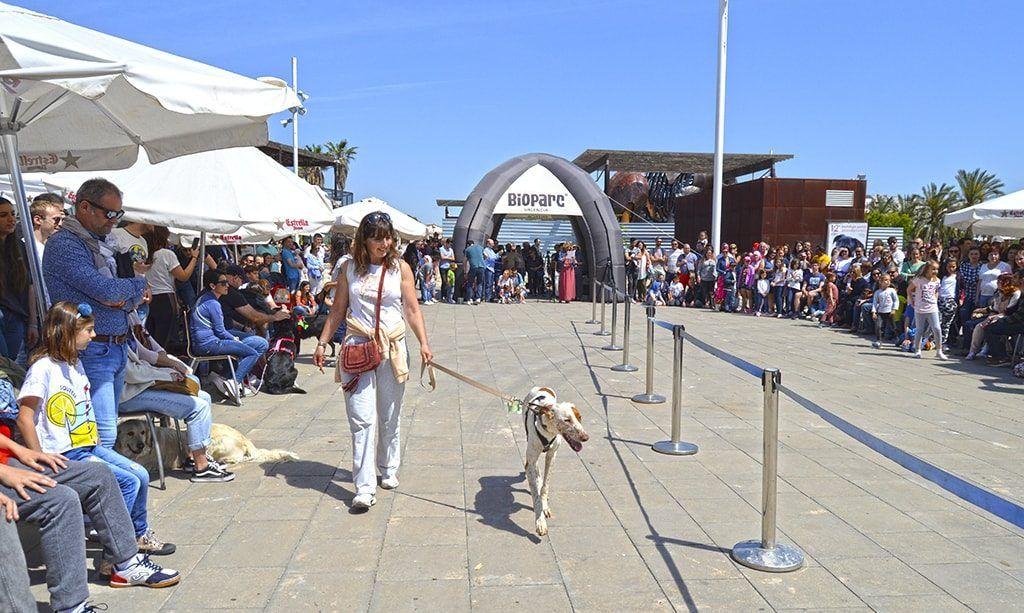 Desfile Solidario de Perros Abandonados