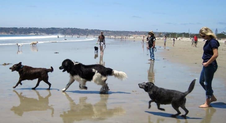 Playa El Brosquil para perros