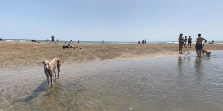 Playa de Alboraya para perros