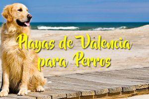 Playas de Valencia para perros