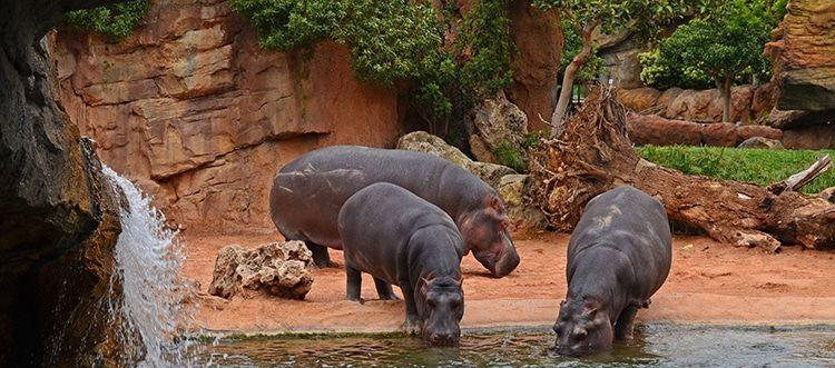 Humedales africanos en Bioparc