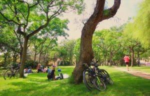 Jardines del Turia en bicicleta