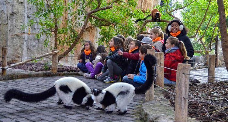 Excursiones para niños en Bioparc