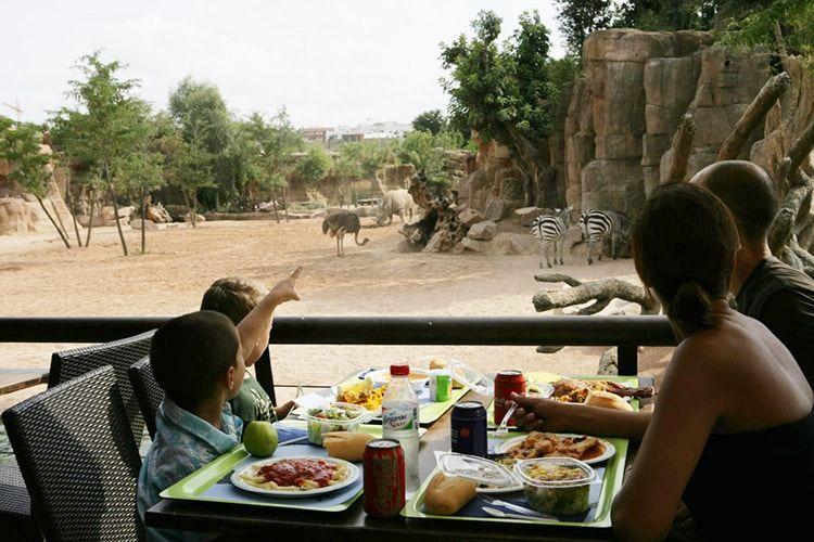 Comer en Bioparc Valencia