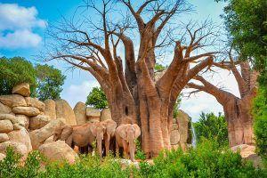 elefantes bioparc valencia