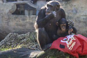 Papá Noel trae regalos en Bioparc