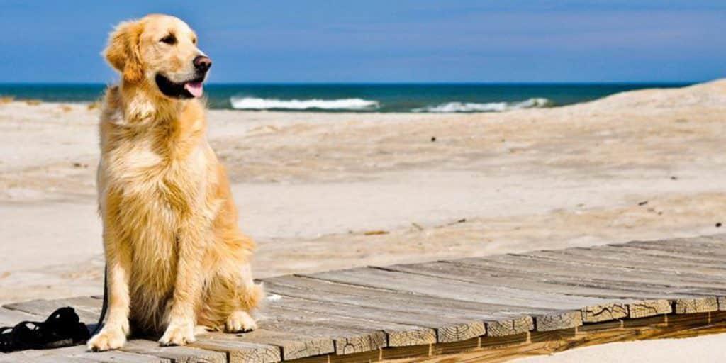 Playa para perros de Pinedo